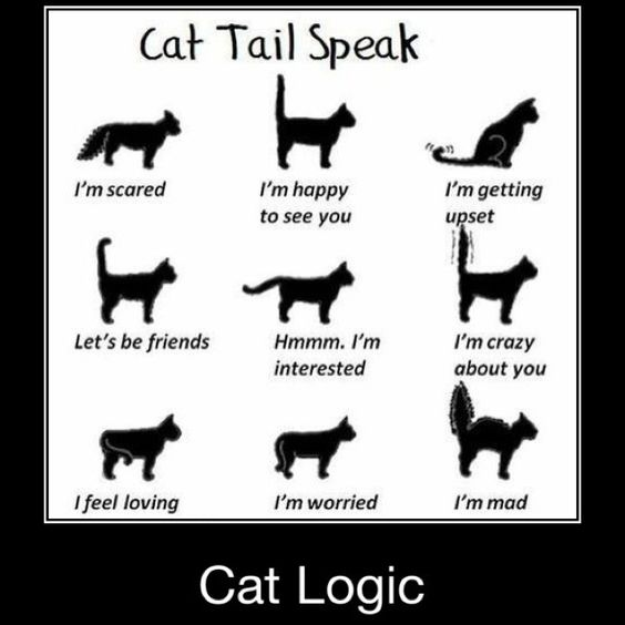 Cats Tails Signs And What They Mean
