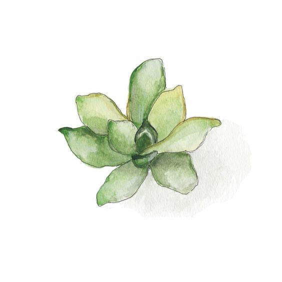 Aeonium Wall Art Prints by Erin Deegan | Minted