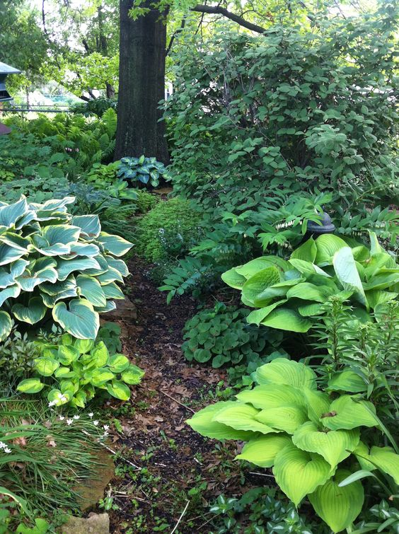 Lovely woodland garden with hostas hostas pinterest for Woodland shade garden designs