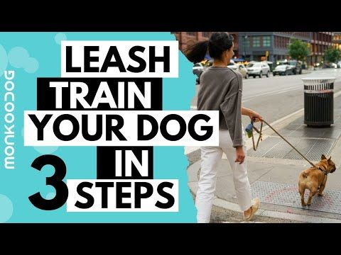 How To Leash Train Your Puppy Or Dog Monkoodog Youtube