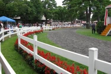 Saratoga Racetrack  Once a year we take a drive up to see the horses run with our friends.