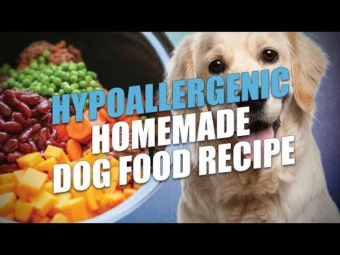Hypoallergenic Homemade Dog Food Recipe Video Instructions Dog