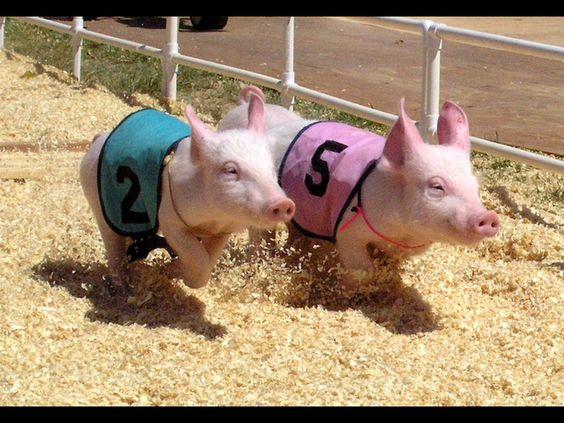 Piggy racing