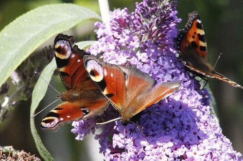 butterfly effect 2013