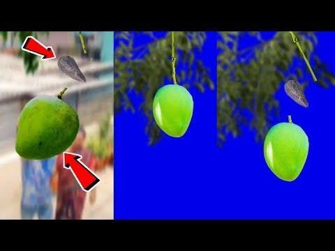 Mango Magic Green Screen Video Tiktok Par Aam Todne Wala Video Vfx New Trend Youtube Greenscreen Picsart Png Picsart