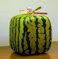 Square Shaped Fruits: How To Grow a Square Watermelon With Kids #popular