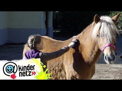 Tiere Bis Unters Dach Alle Folgen Youtube In 2020 Tiere Bis Unters Dach Tiere Pony