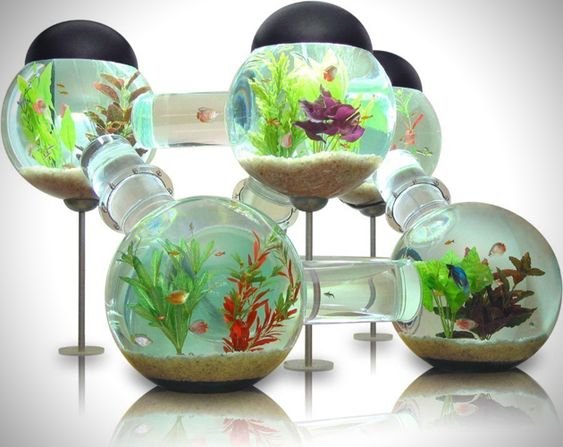As the name of the device would suggest, this is essentially a maze like collection of fish tanks interconnected to make one large labyrinth aquarium