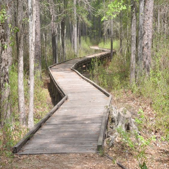 Piney Woods and Big Thicket National Preserve