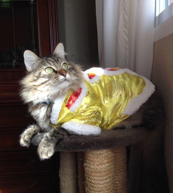 Anselmo. Muy fotogénico. Vestido de emperador chino