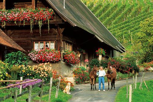 You will see many traditional farm houses in the Black Forest; this one is located in the village of Gengenbach. From the foundational beams to the shingled roof, floors and walls, everything is made from Black Forest timbers.    Many farms offer bed and breakfast, and you shouldn't miss the opportunity to stay in a traditional Black Forest home.