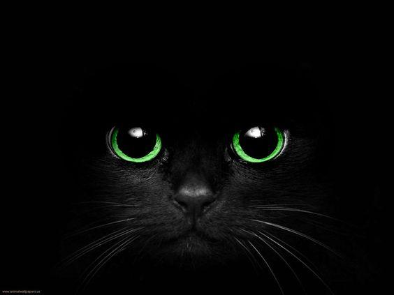 dark cat pokemon