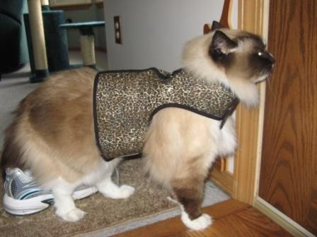 This will be Sweet Pea's Kitty Holster!