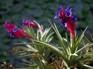 Mirian Decor: Plantas para Banheiro
