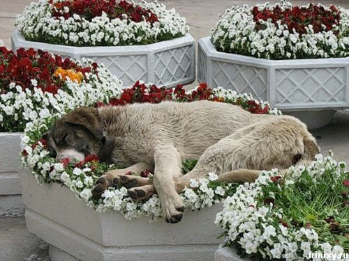 Always stop to smell the flowers. They might smell so lovely you just want to lie down in them.