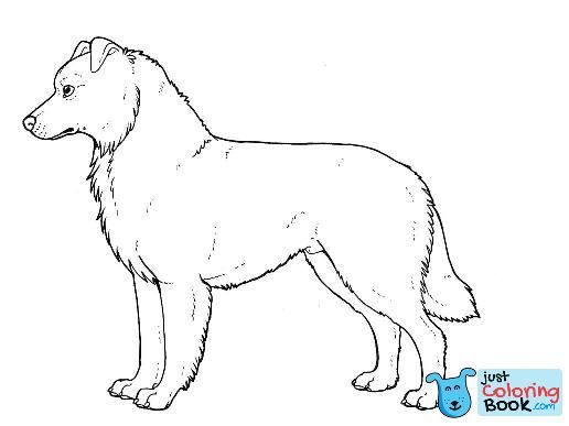 Australian Shepherd Colouring Pagenovablue On Deviantart In Australian Shepherd Coloring Pages