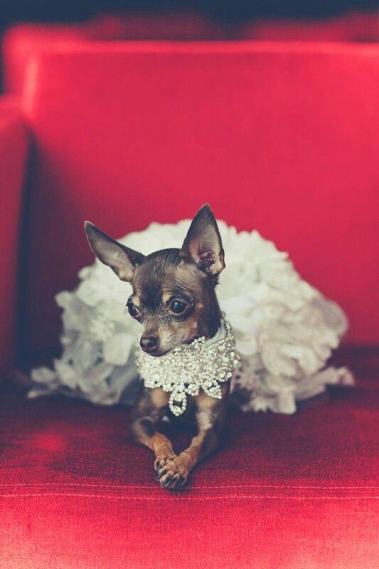 Haute Tails Couture Pet Creations Hautetailscouture Gmail Com