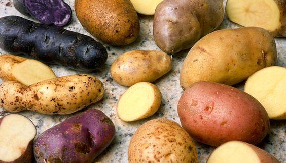 La pomme de terre, que de variétés !