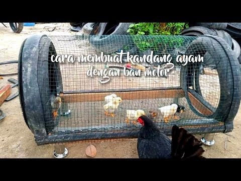 Membuat Kandang Ayam Burung Dari Ban Motor Making Chicken Bird Cages From Motorcycle Tires Youtube Backyard Chicken Coops Chicken Cages Chicken Bird