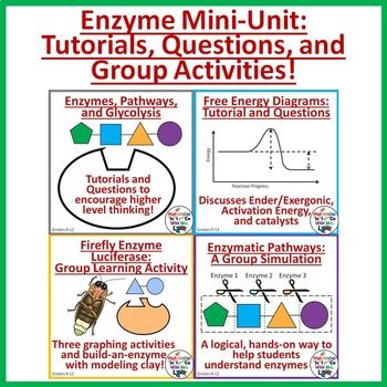 Enzyme Mini-Unit: Worksheets, Graphing Activities, and Paper ...