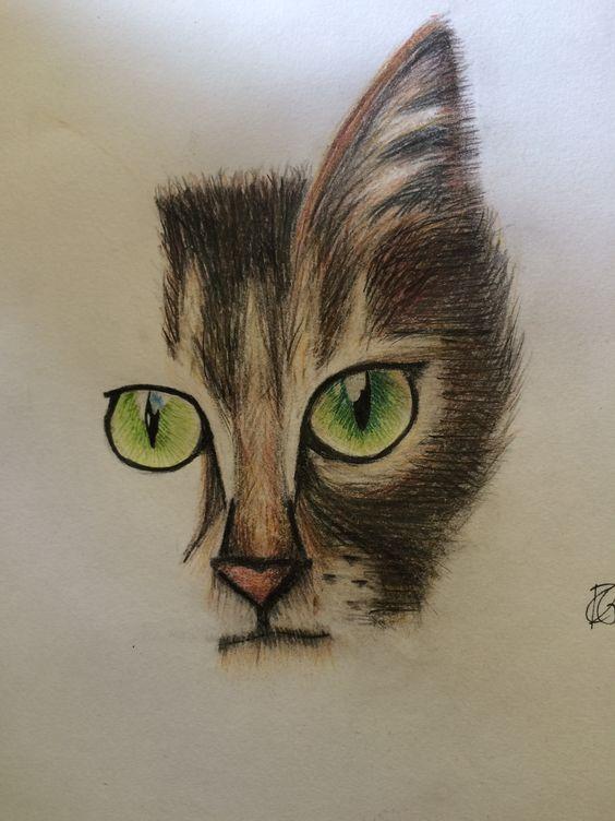 Cat by Claire de Graaff
