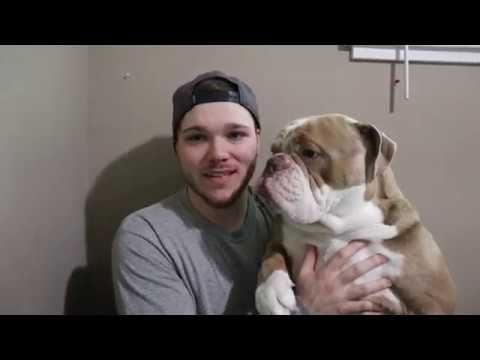 Walter The Bulldog Reacts To Baby Dogs Cute And Funny Dog Videos