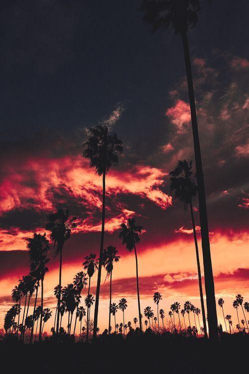 Pinspiration Dreamy Beautiful Sunsets Palmtrees And Tropical Iphone Backgrounds Tireshaisabella Nature Photography Beautiful Sunset Scenery Beautiful los angeles sunset wallpaper