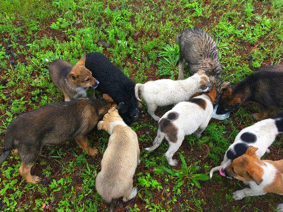 10 голодных щенков ждут вас на СибВО. Фото Evgenia Shveda
