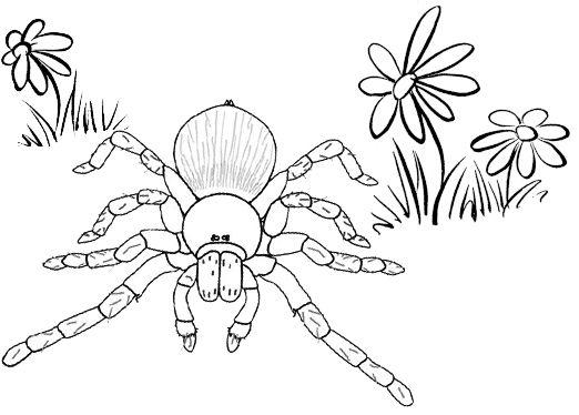 Pin By Illustration Designer On Tarantula Coloring Pages Animal Coloring Pages Coloring Pages My Little Pony Coloring