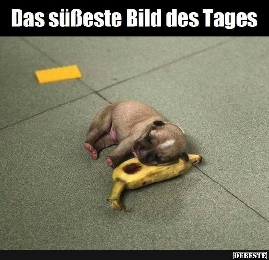 Das Susseste Bild Des Tages Lustige Bilder Spruche Witze Echt Lustig Niedliche Tierbabys Lustige Tierbabys