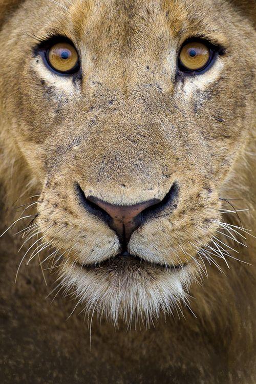 Wonderous-world: Lion Eyes By Mario Moreno