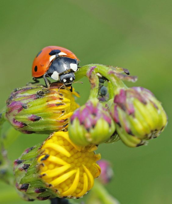 bug bugging... by clochartist-photo on DeviantArt