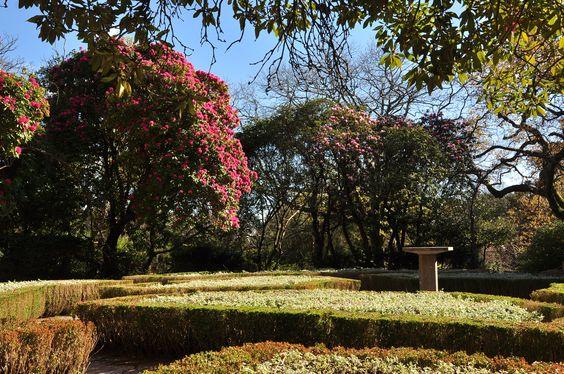 Os rododendros são um dos grupos de plantas mais exuberante neste início primaveril. Nativa da cordilheira dos Himalaias, a espécie de flor mais escura (Rhododendron arboreum) está adaptada a altitudes elevadas e baixas temperaturas, mas é em climas amenos que consegue atingir um porte verdadeiramente majestoso. Venha este fim-de-semana ao jardim do Relógio do Sol, e aprecie-os em todo o seu esplendor! (Foto: Ana Oliveira)