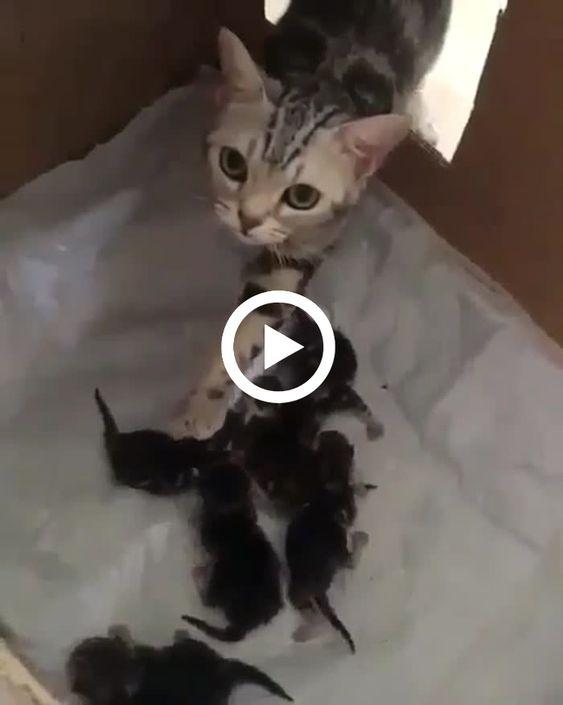 A gatinha amanheceu com sua família aumentada