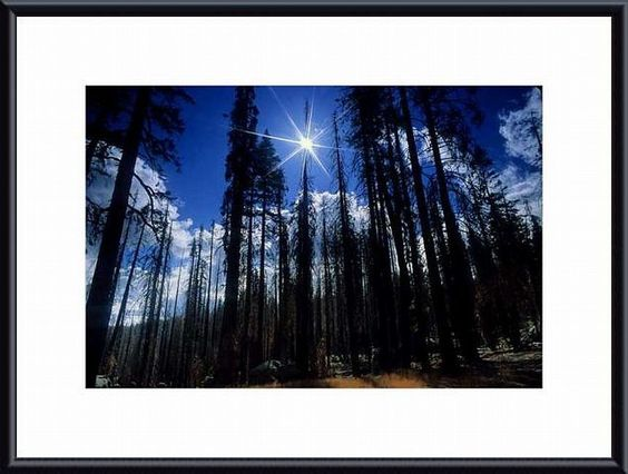 'Star Bright' by John K. Nakata Framed Photographic Print