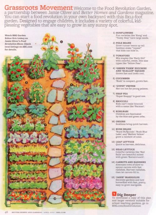A backyard vegetable garden plan for an 8' x 12' space, from Better Homes and Garden, designed by Jamie Oliver.