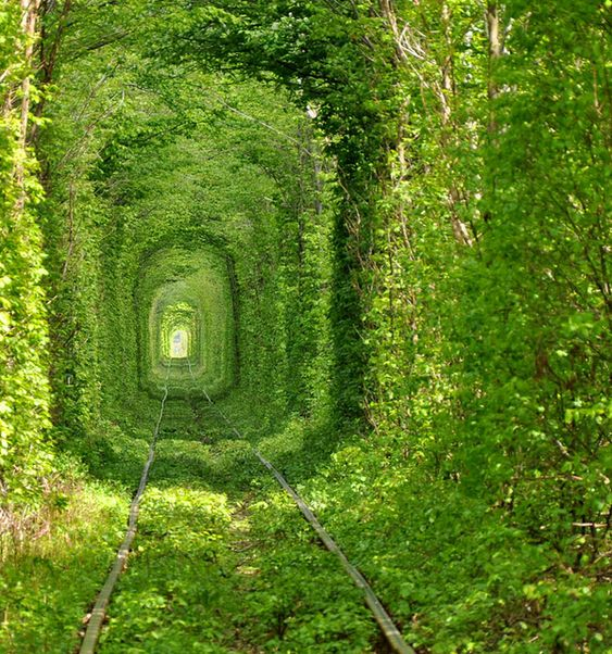 Tree Tunnel - Rivne, Ukraine