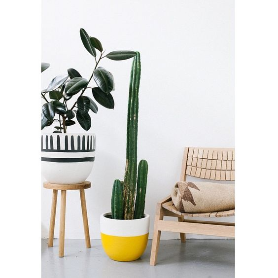 Mali. Mustard dip. Drums stool  #featcenzodesignchair #popandscottshowroom #showroomcomingsoon @cenzo_design