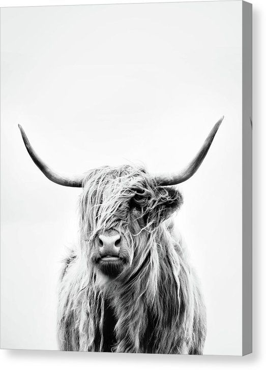 Portrait Of A Highland Cow Vertical Orientation Canvas Print Canvas Art By Dorit Fuhg Highland Cow Art Cow Art Print Highland Cow Canvas