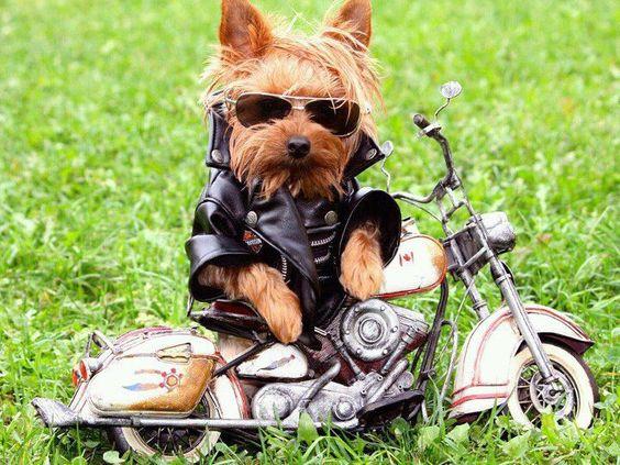 Resultado de imagen para cachorro rockero