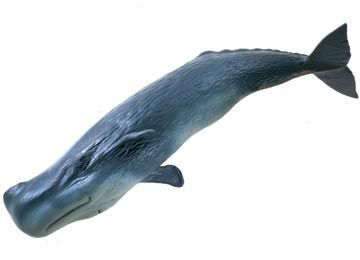 Sperm whale list