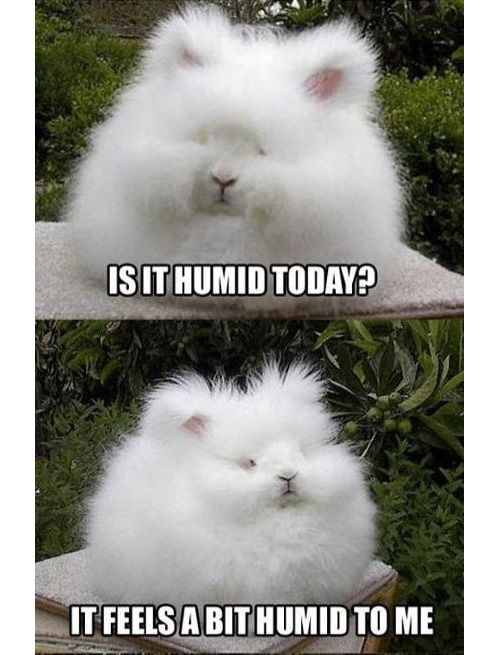 No one escapes humidity!