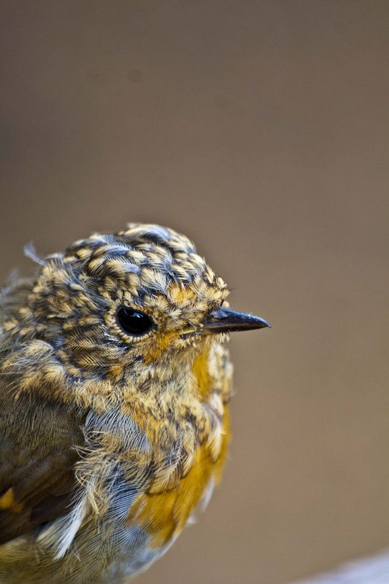 One of my own shots.   Traditional beauty isn't all it's cracked up to be. Who doesn't love this scruffy lil guy?