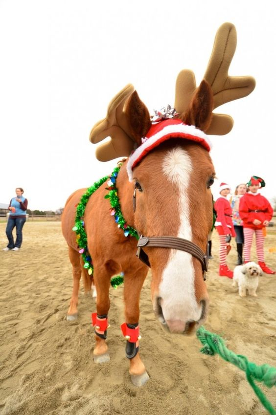 Horses Reindeer And Horse Costumes On Pinterest