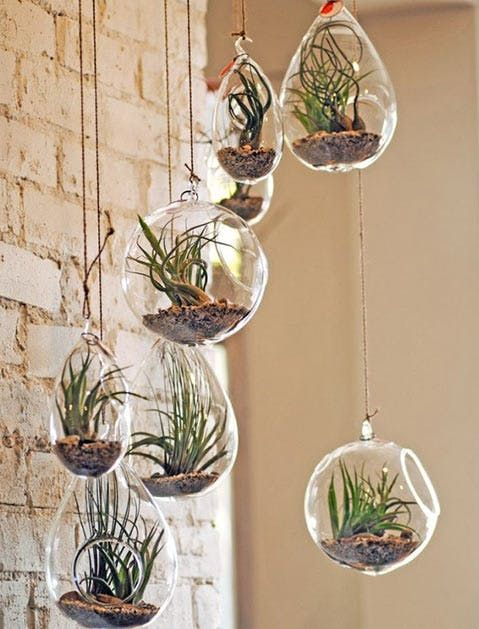Help What S The Best Plant To Put In My Bathroom Hanging Air Plants Air Plant Terrarium Hanging Glass Terrarium