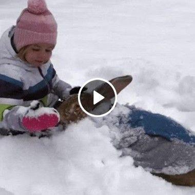 Criança e o seu coelho brincando na neve