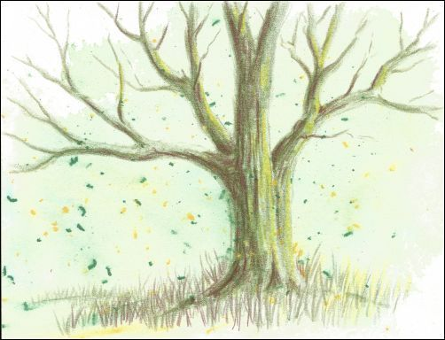 Fast And Easy Backgrounds For Colored Pencil Drawings