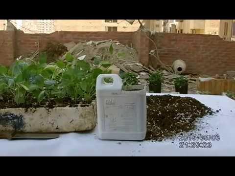 زراعة الاسطح استغل الزبالة فى الزراعه وكل خضار مجانا مجانا مجانا Plants