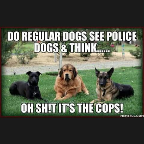 Image Result For Police Dog Memes Policememes Dogs Police Dogs Funny Dogs