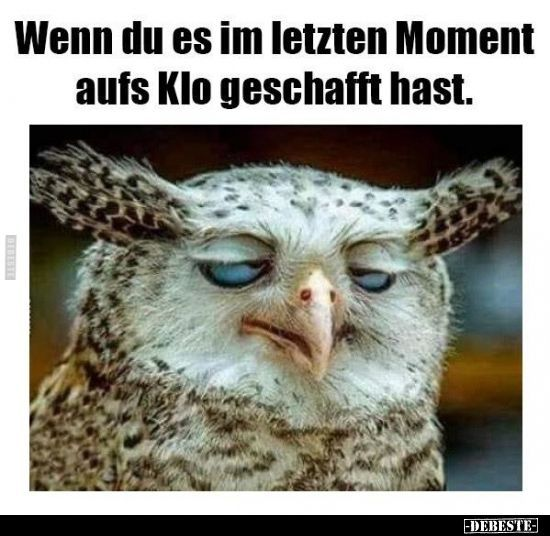 Wenn Du Es Im Letzten Moment Auf Klo Geschafft Hast Lustige Bilder Spruche Witze Echt Lustig In 2020 Funny Pictures Funny Animals Humor